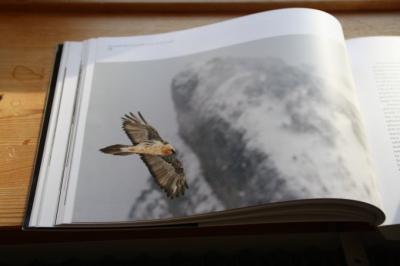 Birdphotography_2