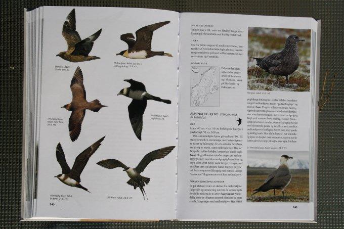 den lille felthåndbog om fugle
