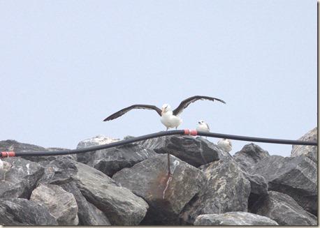 Albatros_2015_lg_2