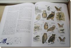 fuglene2