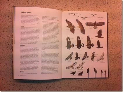Rovfugle i felten 3