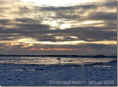 vinter ved molen - januar 16