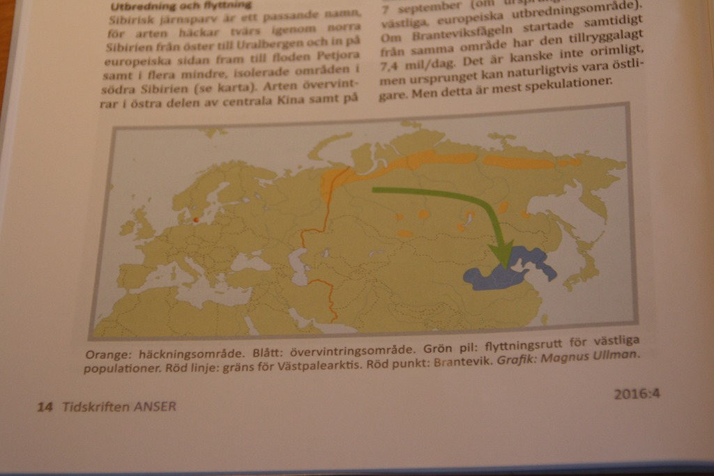 Karta Danmark Hirtshals.Sibirisk Jernspurv I Anser Dof Nordjylland