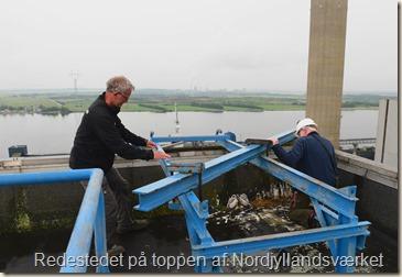Vandrefalkenes rede i 80 meters højde på Nordjyllandsværket - WEB