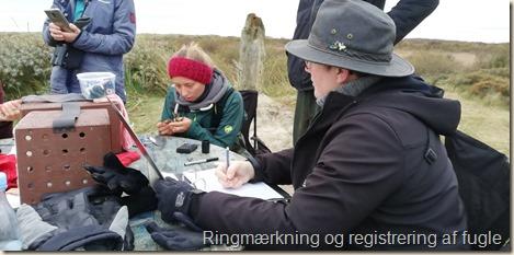 Registering_fugle.jpg